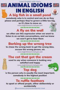 English Idioms   Animal Idioms in English