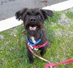 Pepper is now available at the SF SPCA.