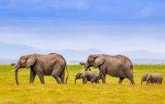 Обои слоны, семья, африка, горы, пейзаж картинки на рабочий стол, раздел животные - скачать