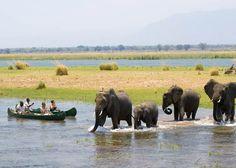Zambian Safari Tours -- One day I'll go!