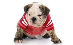 A list of college colors by state and team so your pup can sport your team& colors and have team spirit just like you! Wear your school colors with pride. Sad Dog Stories, Dog Upset Stomach, College Hats, College Football, Elderly Care, Dogs Of The World, Happy Dogs, Pet Shop, Dog Breeds