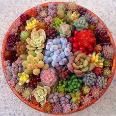 #color #多肉植物 #succulent (Via:ayapl5112 instagrum) ほぉ...これはきれいだ。 お菓子っぽいですね。 観葉植物のお供にヤシマットはどうでしょ?