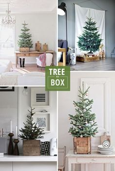 A Christmas trend I'm loving this year: using vintage boxes to hold trees and other holiday displays.
