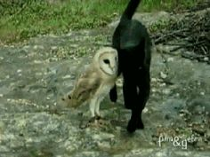 17 Reasons We Know The Owls Are Up To Something | owl gifs @kristinnewton this is hilarious