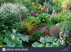 West Lodge South. Sussex. Mixed border in summer. Gillenia trifoliata. Carex elata 'Aurea'. Hosta 'Frances Williams'. Allium chr Stock Photo