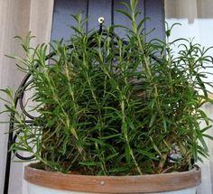 Herbalism, Herbs, Garden, Plants, Herbal Medicine, Garten, Lawn And Garden, Herb, Gardens