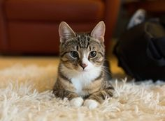 Kitten finds perfect rug at Crate & Barrel