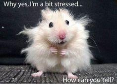 Plus, ein Habitat Book Cover Freebie - Witzig - Lustig Funny Animal Jokes, Funny Animal Pictures, Cute Funny Animals, Animal Memes, Cute Baby Animals, Funny Cute, Really Funny, Funny Photos, Animals And Pets