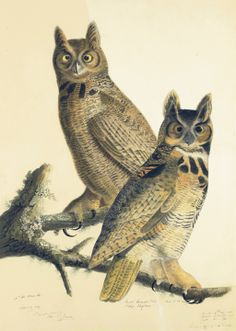 John James Audubon (1785–1851), Great Horned Owl (Bubo virginianus), Study for Havell pl. 61, 1814; after 1821. Watercolor, collage, pastel, graphite, black chalk, black ink, and gouache on three pieces of paper, laid on card. New-York Historical Society, 1863.17.61