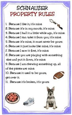 This sounds about right!  Schnauzer Property Rules Magnet VERY FUNNY. $4.79, via Etsy.
