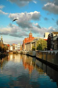 Gorgeous canals in Amsterdam.