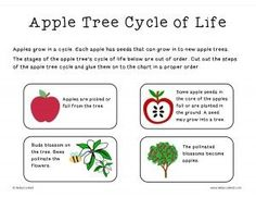 Apple Tree Cycle of Life cut-and-paste Freebie. Perfect for simple review. Line upon Line Learning blog