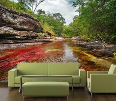 Fotomural Caño Cristales, es un lugar maravilloso donde la naturaleza da uno de sus mejores espectáculos al teñir de colores las aguas de los ríos. A tan solo $69.000 el metro cuadrado. #fotomurales #naturaleza #cañocristales