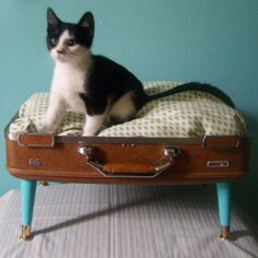 i love the idea of recycling old luggage to make this cat bed!