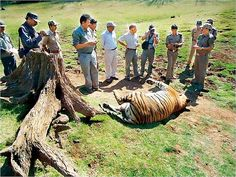 Wildlife experts are reportedly not being consulted on conservation efforts.Bad wildlife practices and eco-tourism are now putting pressure on tiger reserves in the state