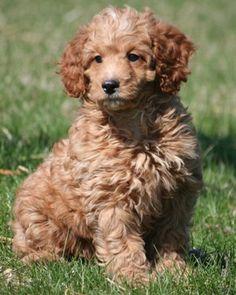 Jasper  Jay im a puppy :D