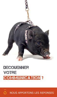 """Résultat de recherche d'images pour """"emailing agence de com"""""""