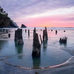 Neskowin, Oregon, is home to one of the most fascinating ghosts forests in the nation; it's petrified wood. Oregon Vacation, Oregon Road Trip, Oregon Trail, Oregon Coast Roadtrip, Oregon Forest, Oregon Beaches, Oh The Places You'll Go, Places To Travel, Travel Destinations