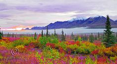 Entering Denali National Park Alaska by AbramsPhotography on Etsy, $28.00