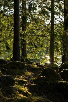 Wald in Schweden (forest in Sweden) | Anja Ergler, Artflakes