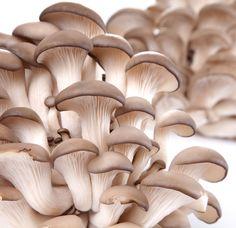 Mushroom Farming - Hobby Farms