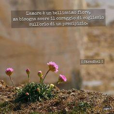 L'amore è un bellissimo fiore, ma bisogna avere il coraggio di coglierlo sull'orlo di un precipizio.