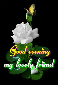 Good Evening my lovely friend ! Good Evening Messages, Good Evening Greetings, Good Evening Wishes, Morning Qoutes, Afternoon Quotes, Gud Afternoon, Good Morning Sweetheart Quotes, Evening Pictures, Romantic Good Night