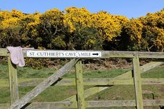 The colours of our Cuthbert's sock yarn are named after places along the long distant walk St Cuthbert's way. St Cuthbert's way links Melrose abbey where St Cuthbert started his religious life in AD650 to the remote island of Lindisfarne, now often known as Holy Island. The route links several sites associated with Cuthbert including Cuthbert's cave where we did the photoshoot for our meandering monk sock pattern. #cuthbertssock #whistlebare #whistlebareyarn #handdyedyarn #sustainablefashion…