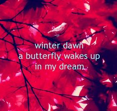 PETITE POEM:   winter dawn / a butterfly wakes up /  in my dream