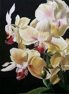Watercolor flowers orchids white