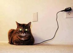 fully charged cat.