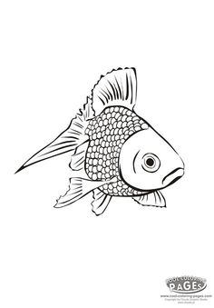 Cute Little Koi Fish Coloring Pages