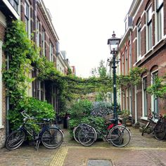 Things to Do in Haarlem: The Perfect Day Trip From Amsterdam - This Darling World Around The World In 80 Days, Around The Worlds, Canada Travel, Travel Usa, Holland Country, Amsterdam Netherlands, The Netherlands, Places To Travel, Places To Visit