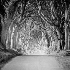 Dark Hedges Ireland, Fine Art Photography, Landscape Photography, Panorama Camera, Black And White Landscape, Contemporary Landscape, White Art, Black White, Black And White Photography