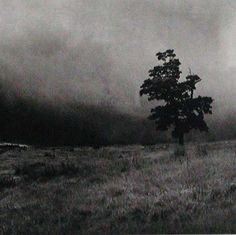 Fay Godwin February 1931 – 27 May Classy Photography, Black And White Photography, Street Photography, Art Photography, Famous Photographers, Landscape Photographers, Black And White Landscape, Old Trees, Surrealism Photography
