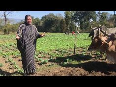 Thankyou (Under 4 Min Video) A message from Dr Vandana Shiva for the New Year 2020 Vandana Shiva, Rachel Carson, Do It Anyway, New Year 2020, Things To Know, Environment, Messages, Permaculture, Agriculture