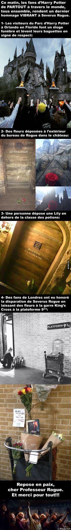 Les fans de Harry Potter livrent un dernier hommage VIBRANT à Severus Rogue partout dans le monde                                                                                                                                                                                 Plus