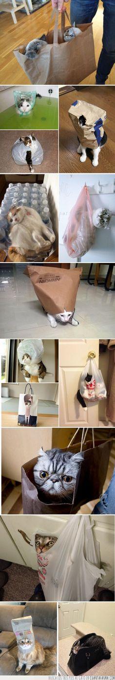Gatos dentro de bolsas, la historia de amor interminable