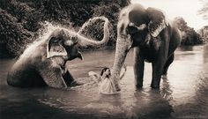 Elephant lightning —Gregory Colbert
