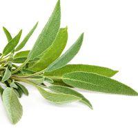 Η τροφή μας το φάρμακό μας: Καλλιεργήστε το... φαρμακείο σας!!! Salvia, Premature Grey Hair, Facial Care, Herbalism, Plant Leaves, Short Hair Styles, Hair Beauty, Lily, Plants