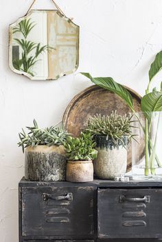 vintage cupboard and potted plants