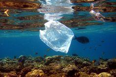 Müll: Forscher entdecken Plastik-fressende Bakterien - SPIEGEL ONLINE - Wissenschaft