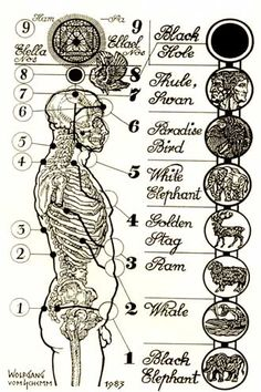 "The nine etheric bodies, according to ""The Only Planet of Choice"""