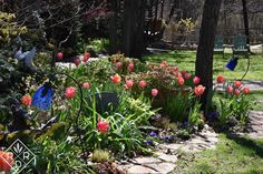 Tulips in the front border fully recovered from the freezes. The Freeze, Bulbs, Frozen, Shit Happens, Spring, Garden, Plants, Lamps, Bulb Lights
