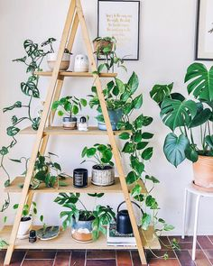 Indoor Plant Decor ideas are fun for people of all ages. You don't have to have a huge garden or your Indoor Plant Decor Ideas are perfect for small garden arrangements. There are many different plants that are suitable for… Continue Reading → Home Garden Design, Home And Garden, Plantas Indoor, Decoration Plante, House Plants Decor, Indoor House Plants, Bedroom With Plants, Plant Rooms, Plants On Balcony