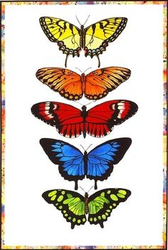 This rainbow of butterflies is surrounded by a border of abstract watercolor which combines all the colors of the butterflies. These are all based on real butterflies. Butterfly Illustration, Butterfly Drawing, Butterfly Painting, Butterfly Watercolor, Butterfly Wings, Abstract Watercolor, Watercolor Paintings, Art For Sale Online, Vintage Butterfly