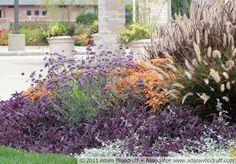 Pennisetum setaceum 'Rubrum', Solenostemon x 'Rustic Orange', Tradescantia pallida, Helichrysum petiolare, Verbena bonariensis