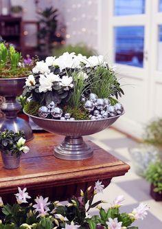 8 x tunnelmalliset joulun kukat | Meillä kotona