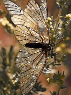 FACT CHECK: Does a Photograph Show an 'Endangered Starry Butterfly'? aesthetic sparkly Is This an 'Endangered Starry Butterfly'? Boujee Aesthetic, Aesthetic Vintage, Aesthetic Photo, Aesthetic Pictures, Angel Aesthetic, Flower Aesthetic, Photo Wall Collage, Picture Wall, Lila Baby