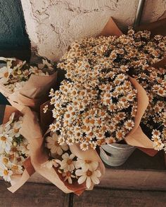 My Flower, Wild Flowers, Beautiful Flowers, Fresh Flowers, Spring Aesthetic, Flower Aesthetic, Aesthetic Backgrounds, Aesthetic Wallpapers, Daisy